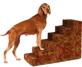 Dog Car Ramps & Steps | 10% Off