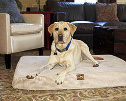 New Arrivals  | 10% Off | Sale Prices Everyday | Dog Beds & More