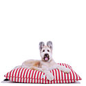 Harry Barker  |  20% Off  Harry Barker Dog Beds