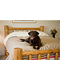 Mambe Blankets   |  Mambe Waterproof Dog Blankets | 10% Off Storewide